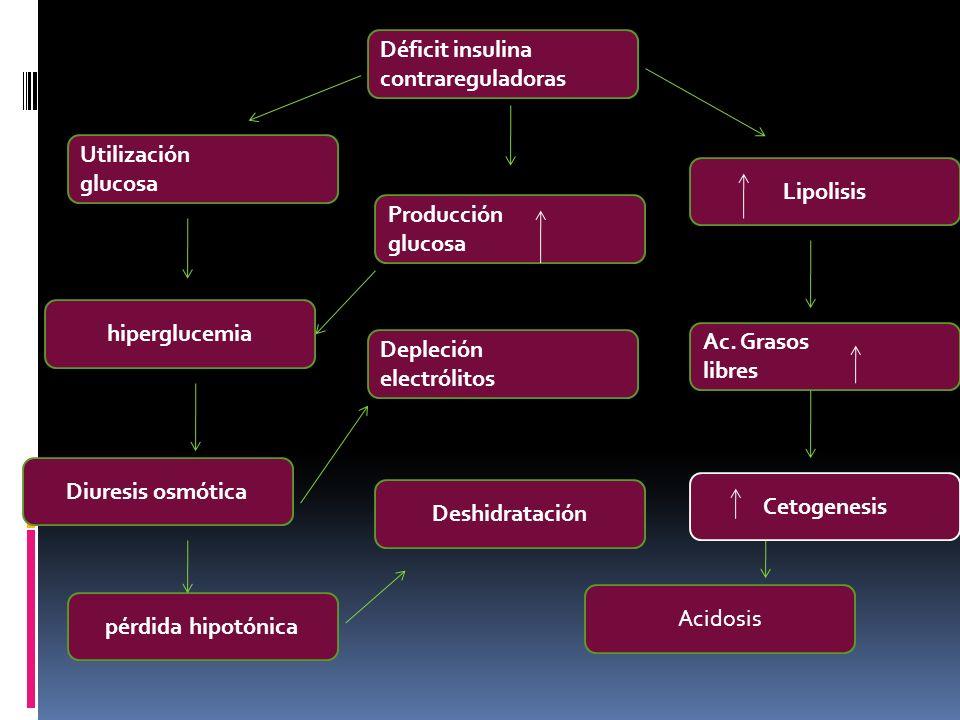 Déficit insulina contrareguladoras. Utilización. glucosa. Lipolisis. Producción. glucosa. hiperglucemia.