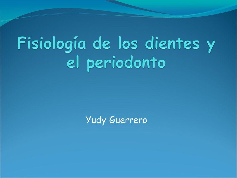Yudy Guerrero