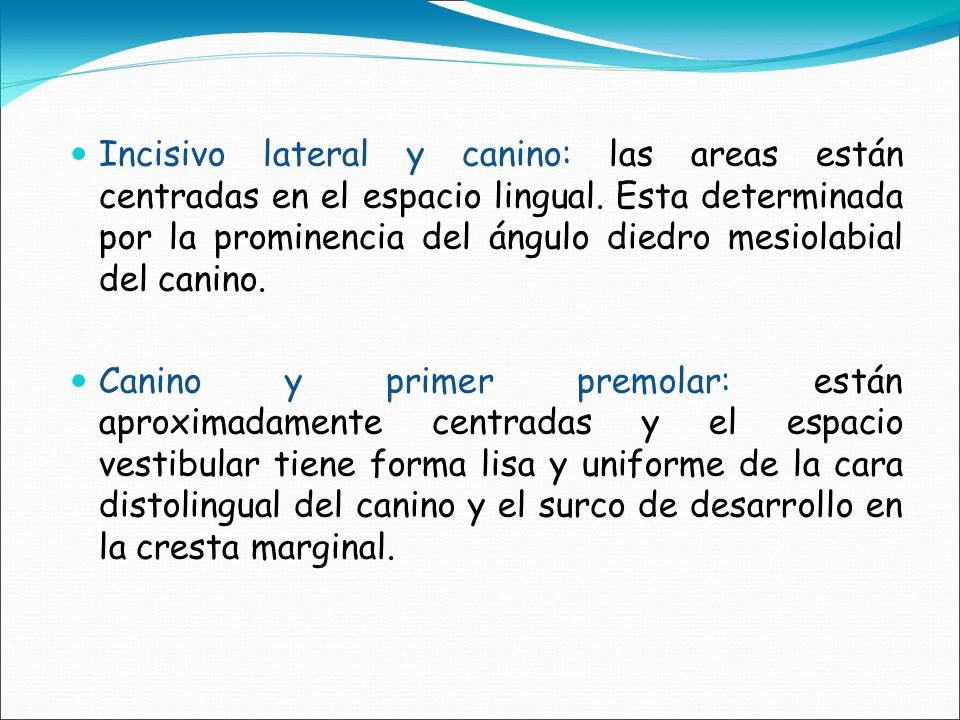 Incisivo lateral y canino: las areas están centradas en el espacio lingual. Esta determinada por la prominencia del ángulo diedro mesiolabial del canino.