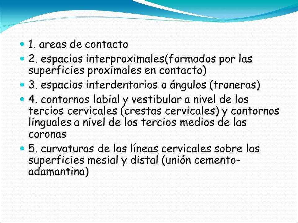 1. areas de contacto 2. espacios interproximales(formados por las superficies proximales en contacto)