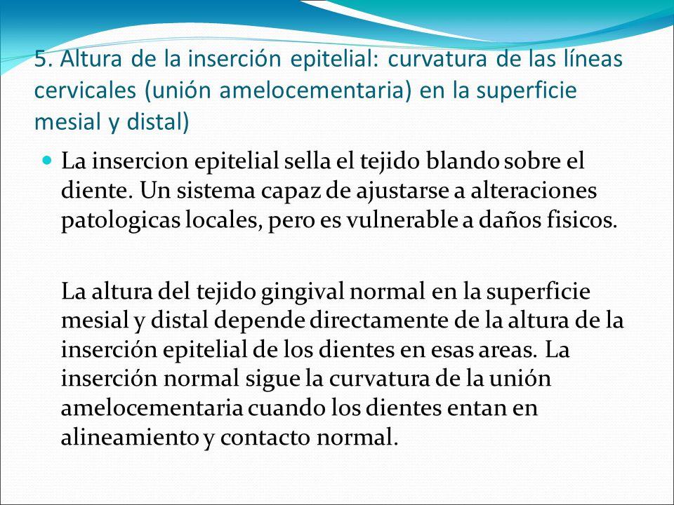 5. Altura de la inserción epitelial: curvatura de las líneas cervicales (unión amelocementaria) en la superficie mesial y distal)
