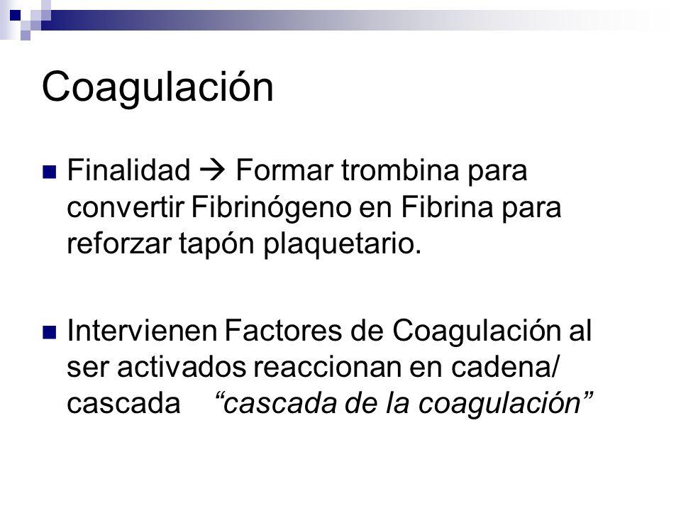Coagulación Finalidad  Formar trombina para convertir Fibrinógeno en Fibrina para reforzar tapón plaquetario.