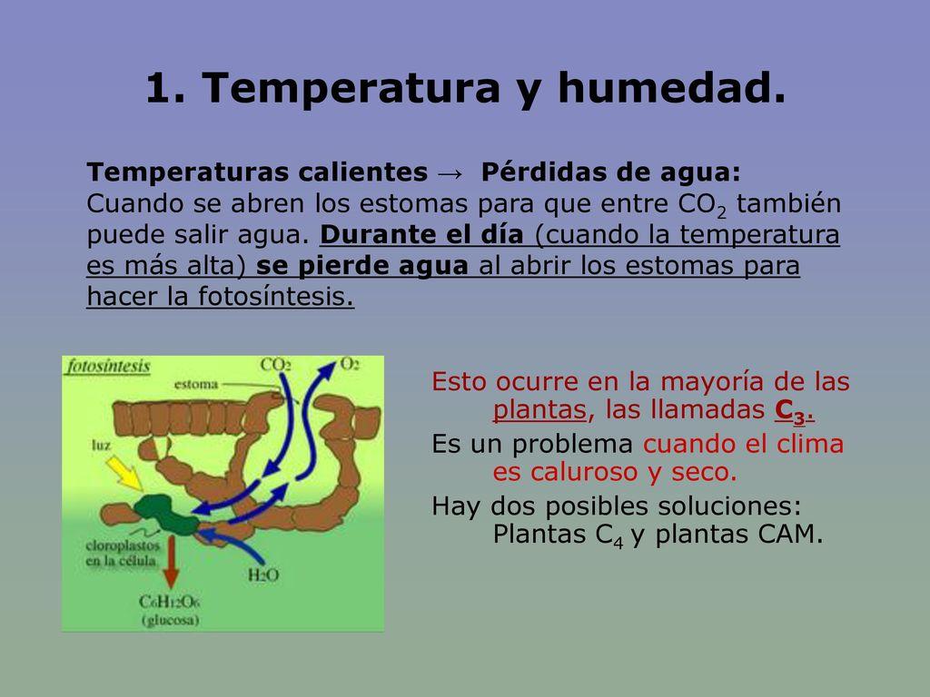 1. Temperatura y humedad. Temperaturas calientes → Pérdidas de agua: