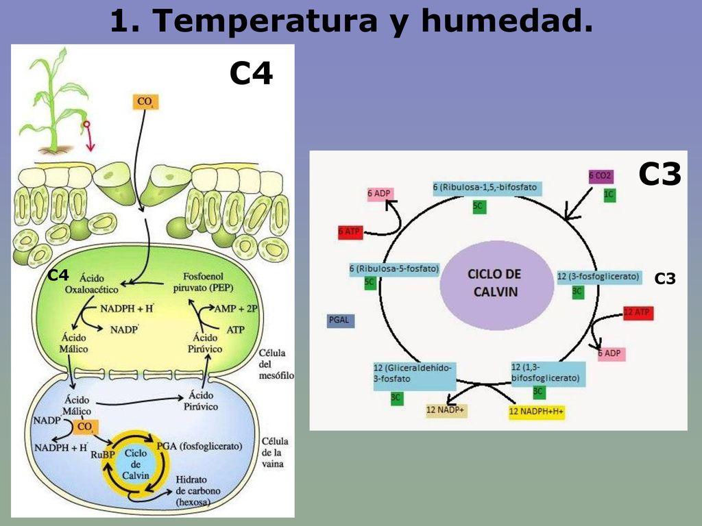 1. Temperatura y humedad. C4 C3