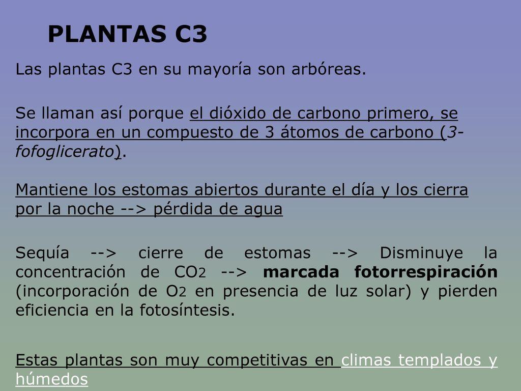 PLANTAS C3 Las plantas C3 en su mayoría son arbóreas.
