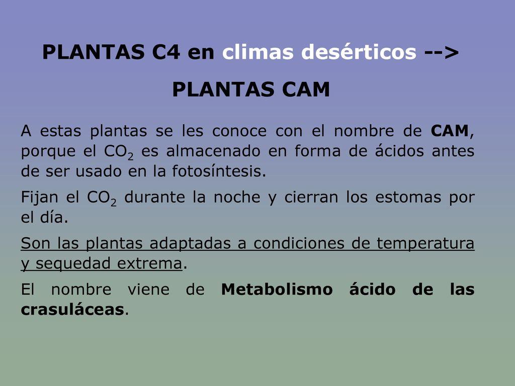 PLANTAS C4 en climas desérticos -->
