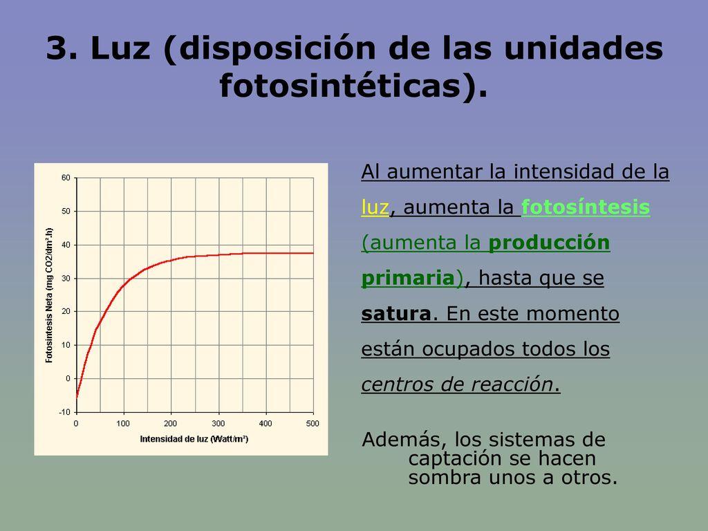 3. Luz (disposición de las unidades fotosintéticas).