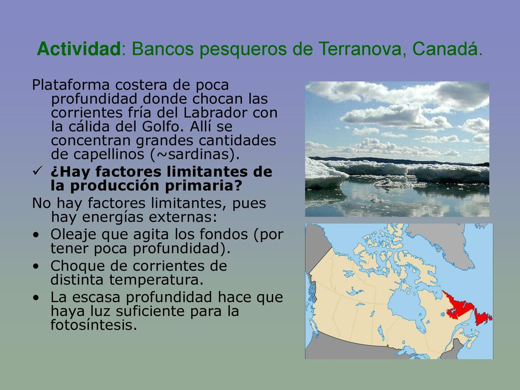 Actividad: Bancos pesqueros de Terranova, Canadá.