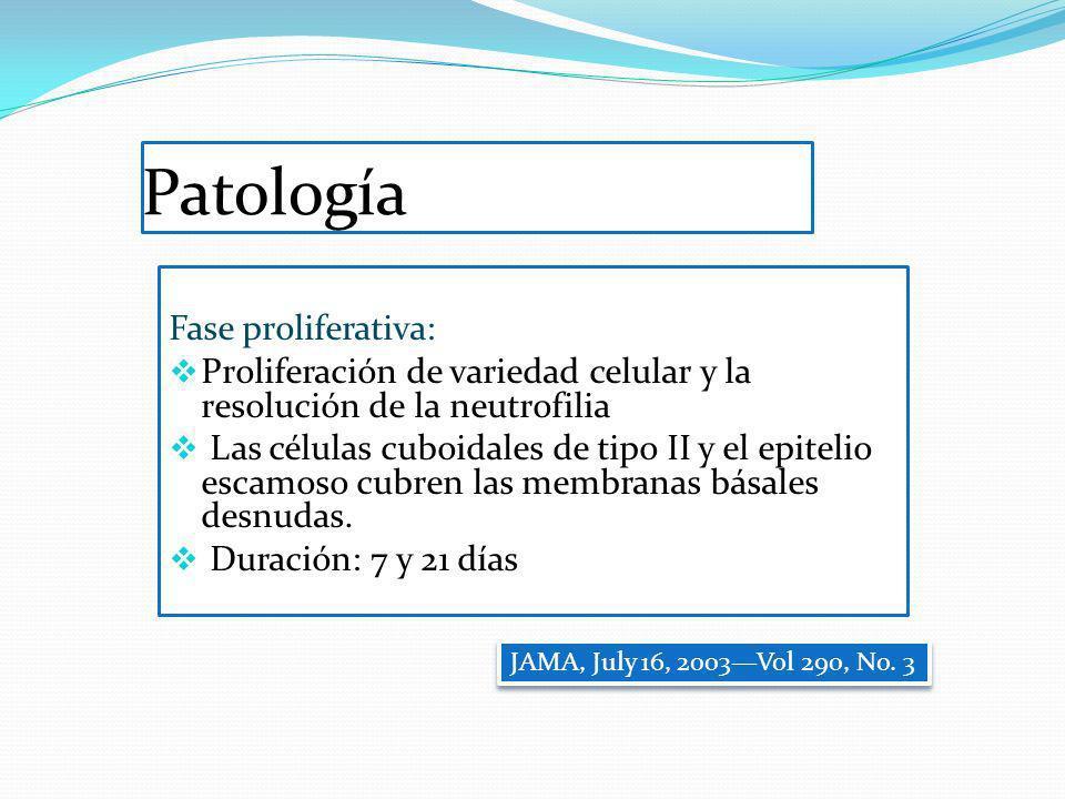 Patología Fase proliferativa:
