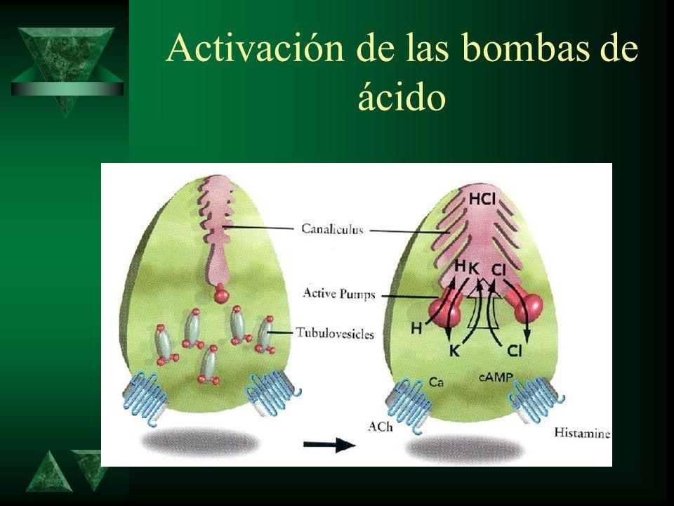 Activación de las bombas de ácido