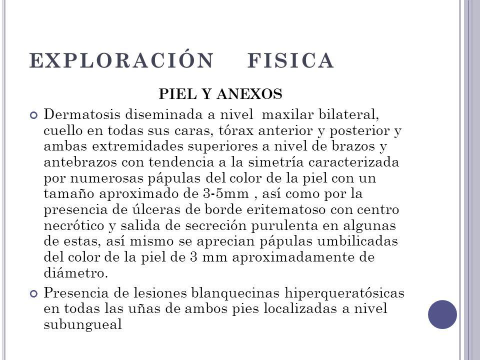EXPLORACIÓN FISICA PIEL Y ANEXOS