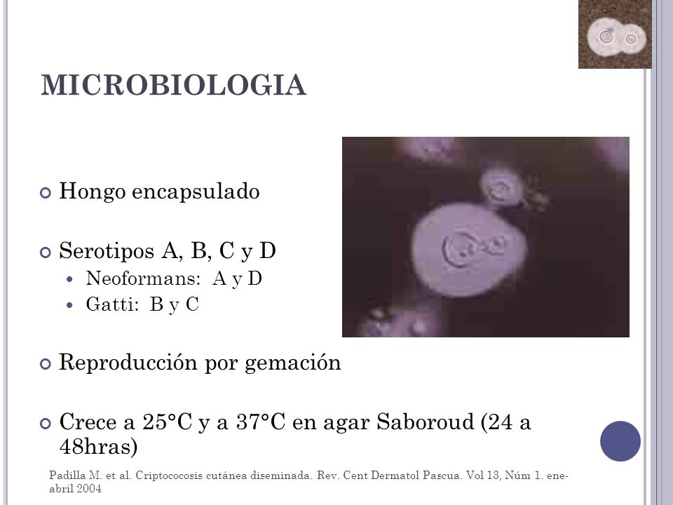 MICROBIOLOGIA Hongo encapsulado Serotipos A, B, C y D