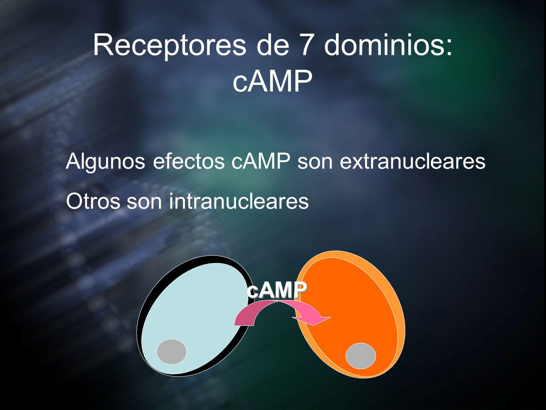 Receptores de 7 dominios: cAMP