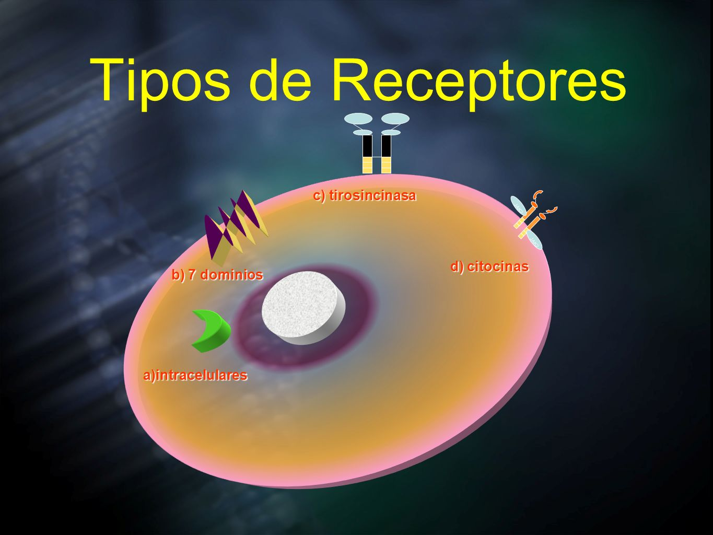 Tipos de Receptores c) tirosincinasa d) citocinas b) 7 dominios