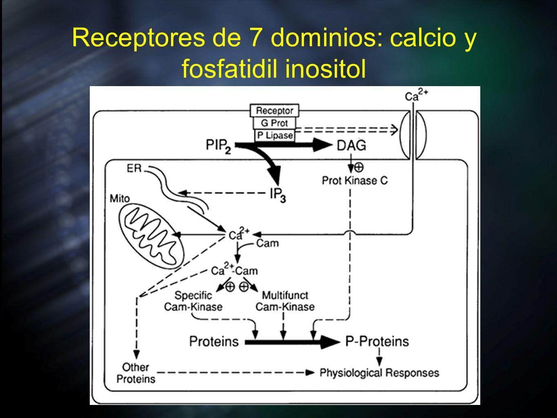 Receptores de 7 dominios: calcio y fosfatidil inositol