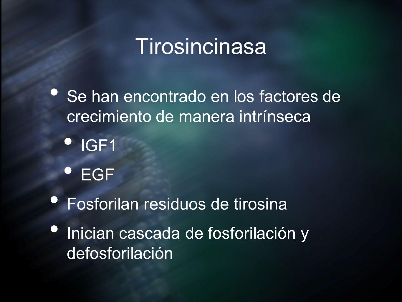 TirosincinasaSe han encontrado en los factores de crecimiento de manera intrínseca. IGF1. EGF. Fosforilan residuos de tirosina.