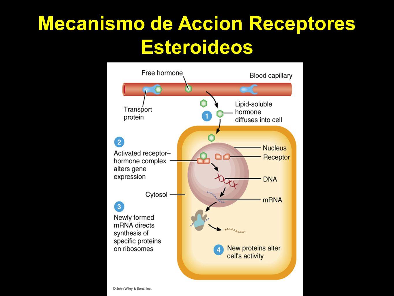 Mecanismo de Accion Receptores Esteroideos