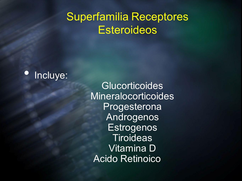 Superfamilia Receptores Esteroideos