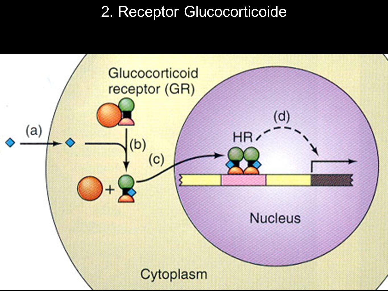 2. Receptor Glucocorticoide