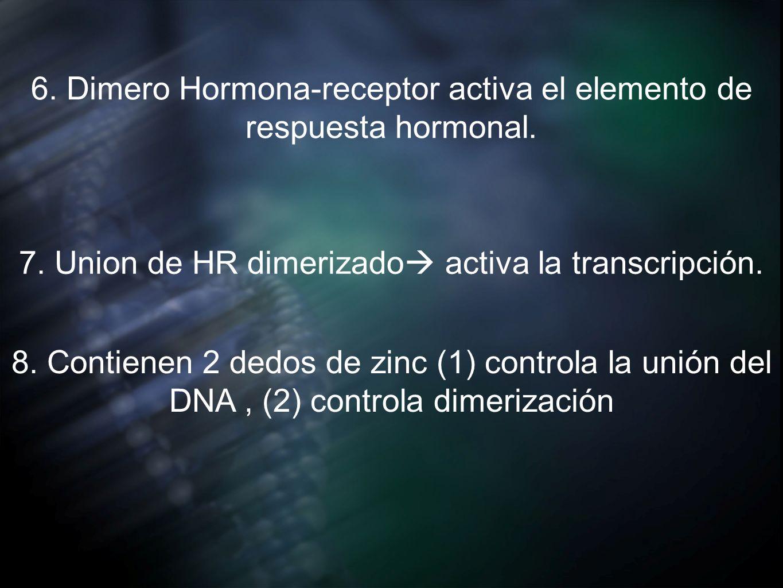 6. Dimero Hormona-receptor activa el elemento de respuesta hormonal.