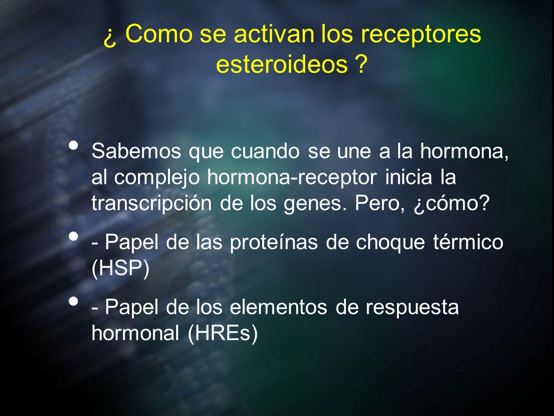 ¿ Como se activan los receptores esteroideos