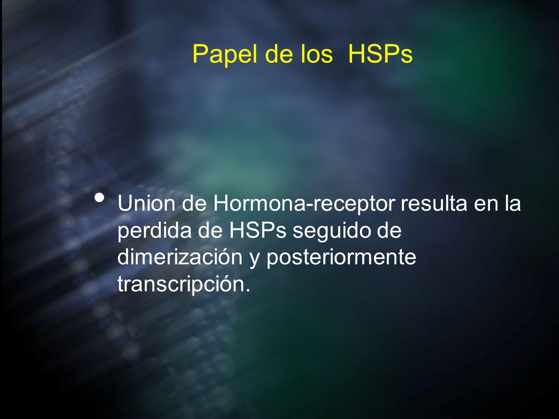 Papel de los HSPsUnion de Hormona-receptor resulta en la perdida de HSPs seguido de dimerización y posteriormente transcripción.