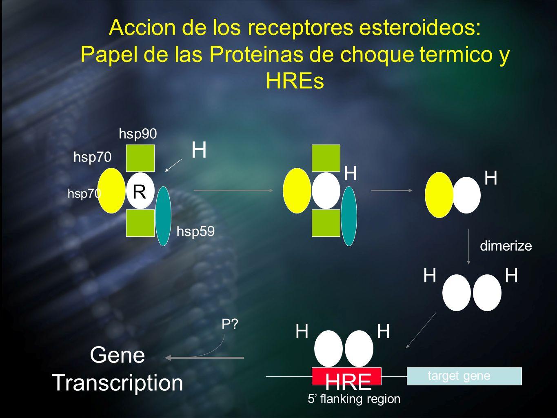 H Gene Transcription HRE