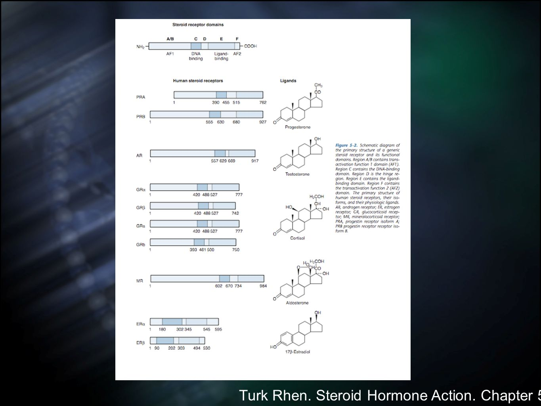 Turk Rhen. Steroid Hormone Action. Chapter 5