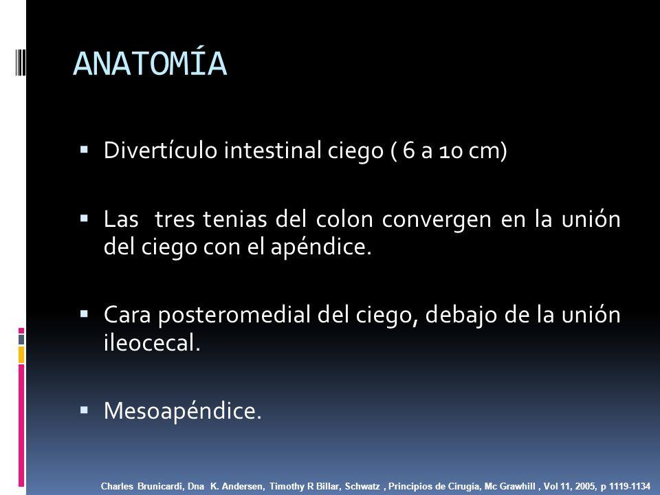 ANATOMÍA Divertículo intestinal ciego ( 6 a 10 cm)