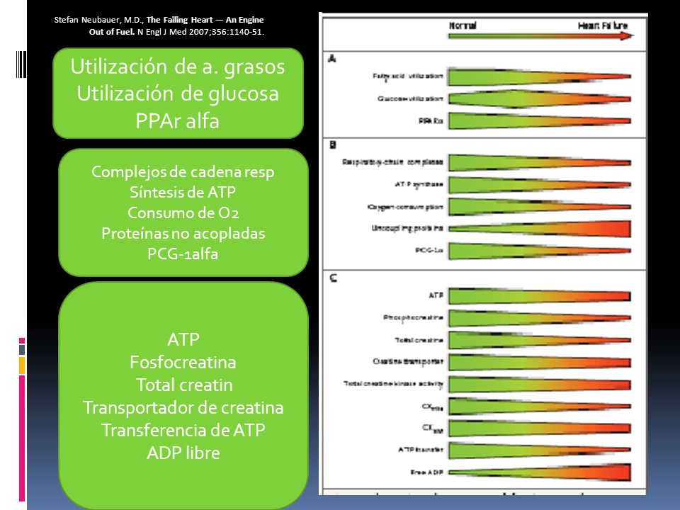 Utilización de a. grasos Utilización de glucosa PPAr alfa
