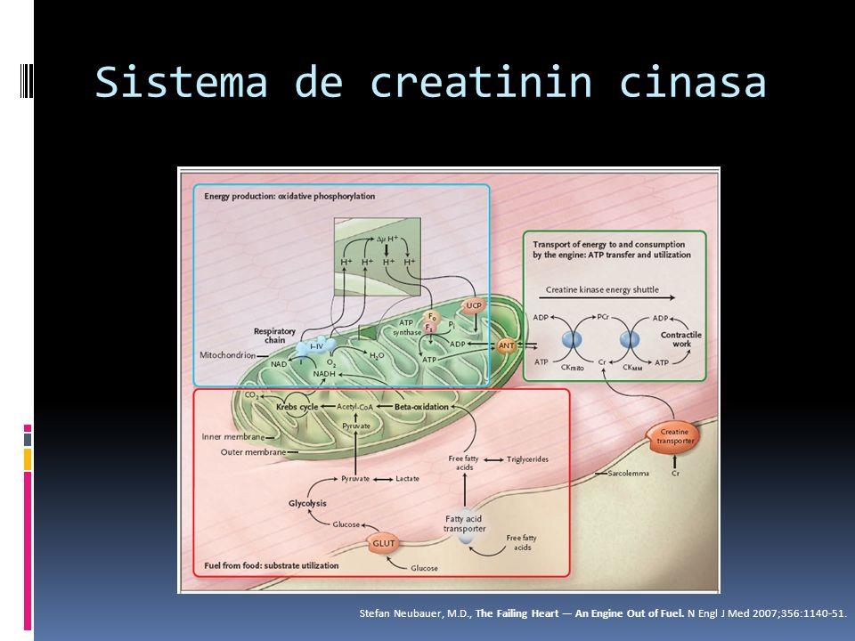 Sistema de creatinin cinasa