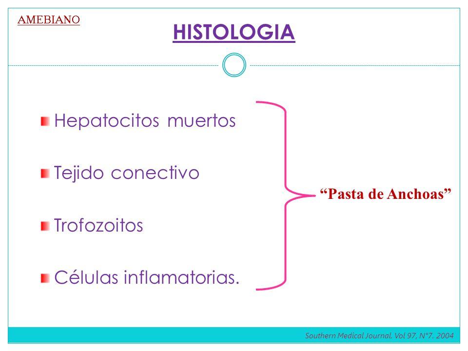 HISTOLOGIA Hepatocitos muertos Tejido conectivo Trofozoitos