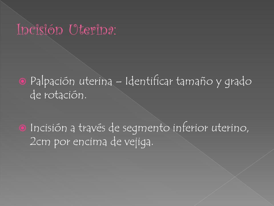 Incisión Uterina:Palpación uterina – Identificar tamaño y grado de rotación.