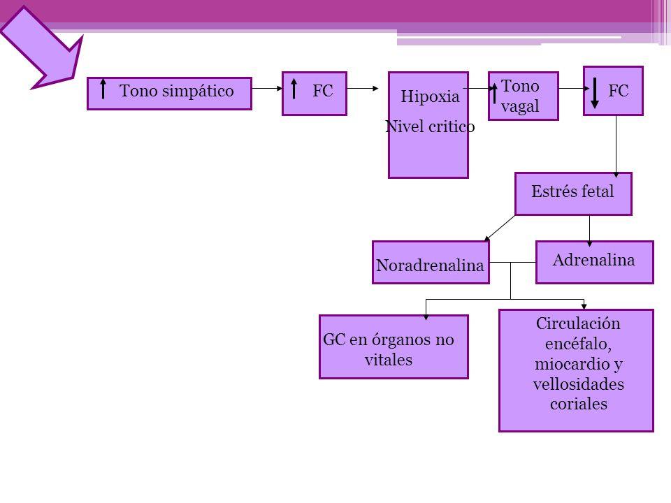 Circulación encéfalo, miocardio y vellosidades coriales