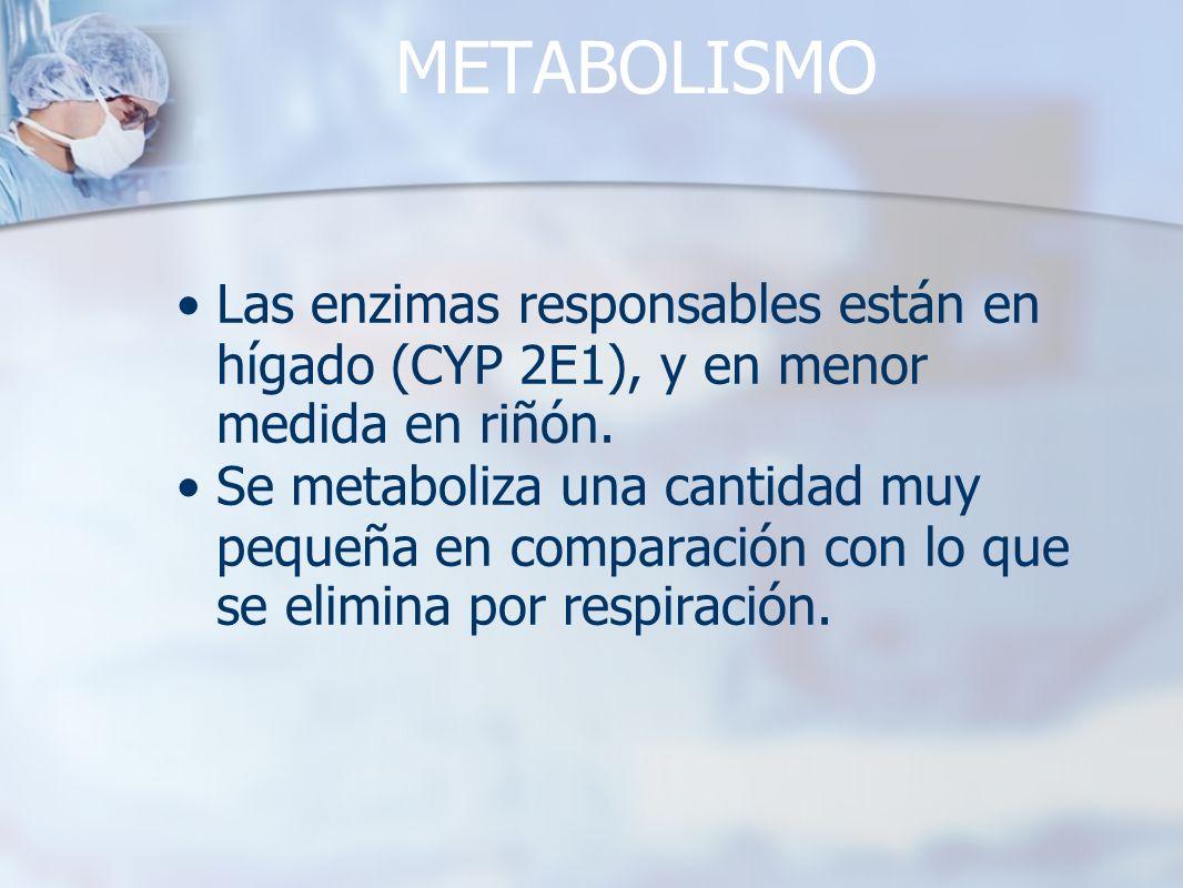 METABOLISMO Las enzimas responsables están en hígado (CYP 2E1), y en menor medida en riñón.