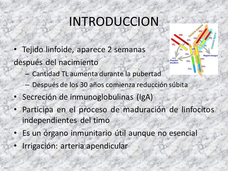 INTRODUCCION Tejido linfoide, aparece 2 semanas después del nacimiento