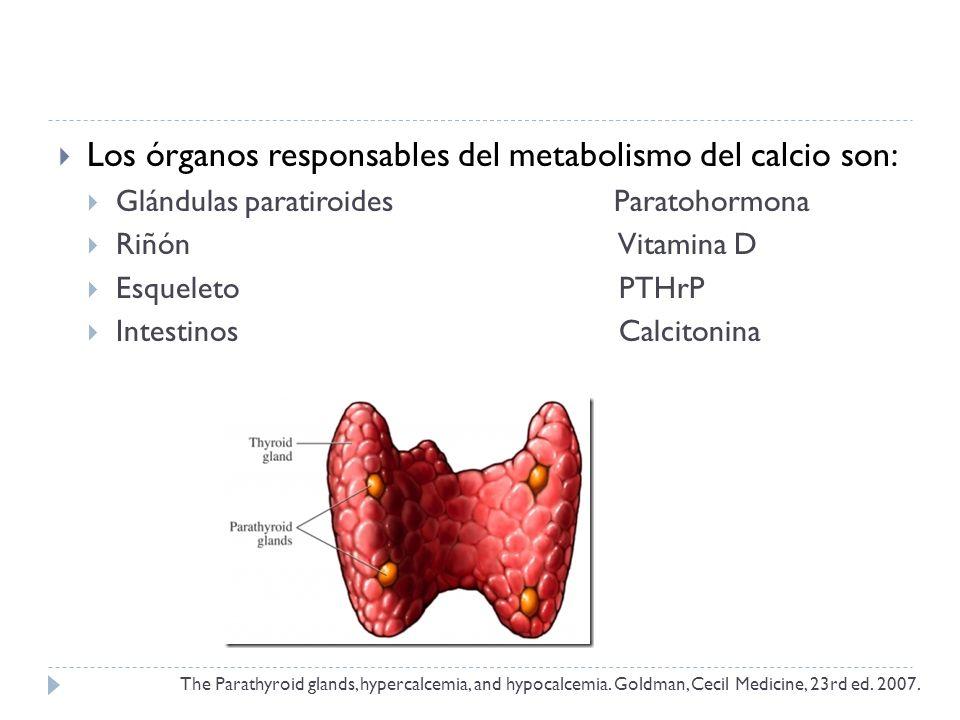 Los órganos responsables del metabolismo del calcio son:
