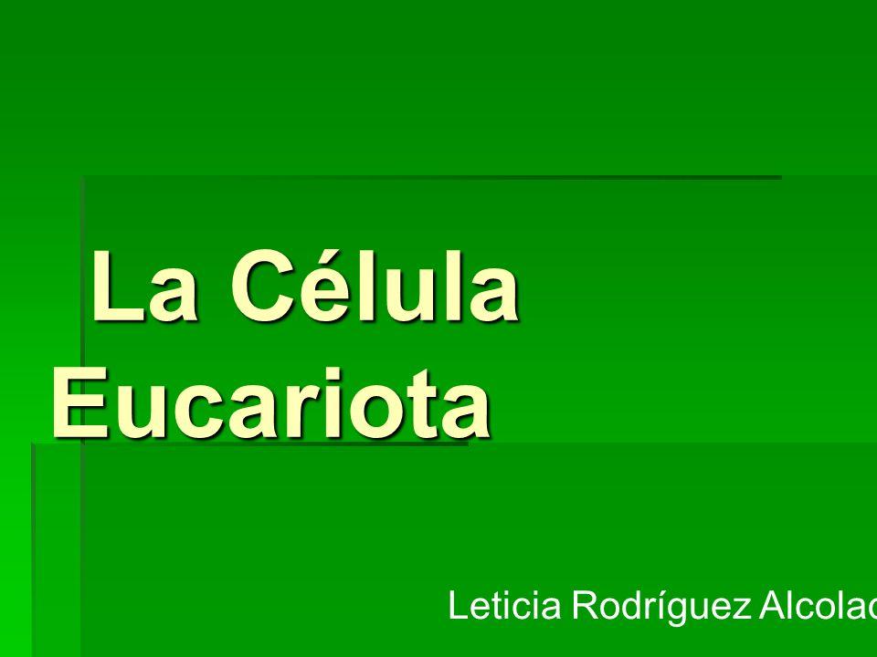 La Célula Eucariota Leticia Rodríguez Alcolado