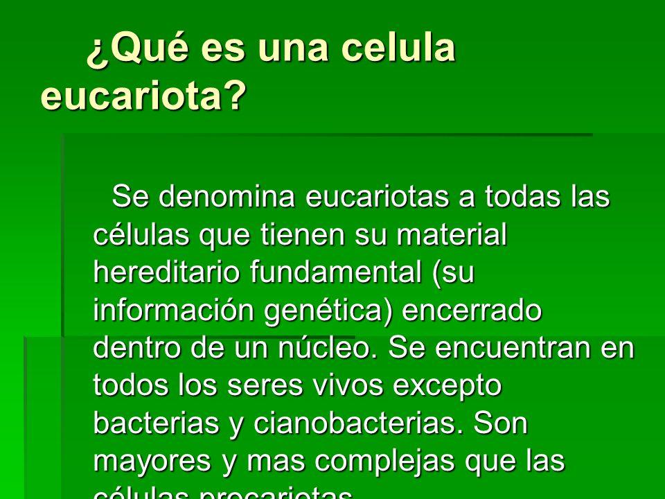 ¿Qué es una celula eucariota