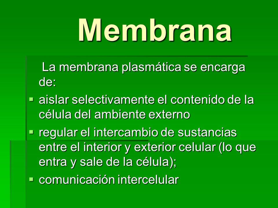 Membrana La membrana plasmática se encarga de:
