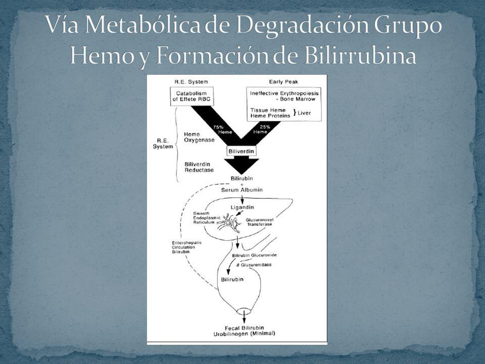 Vía Metabólica de Degradación Grupo Hemo y Formación de Bilirrubina