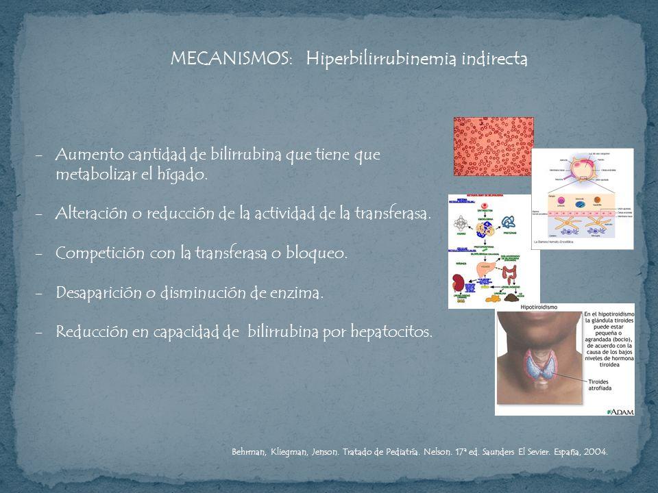 MECANISMOS: Hiperbilirrubinemia indirecta