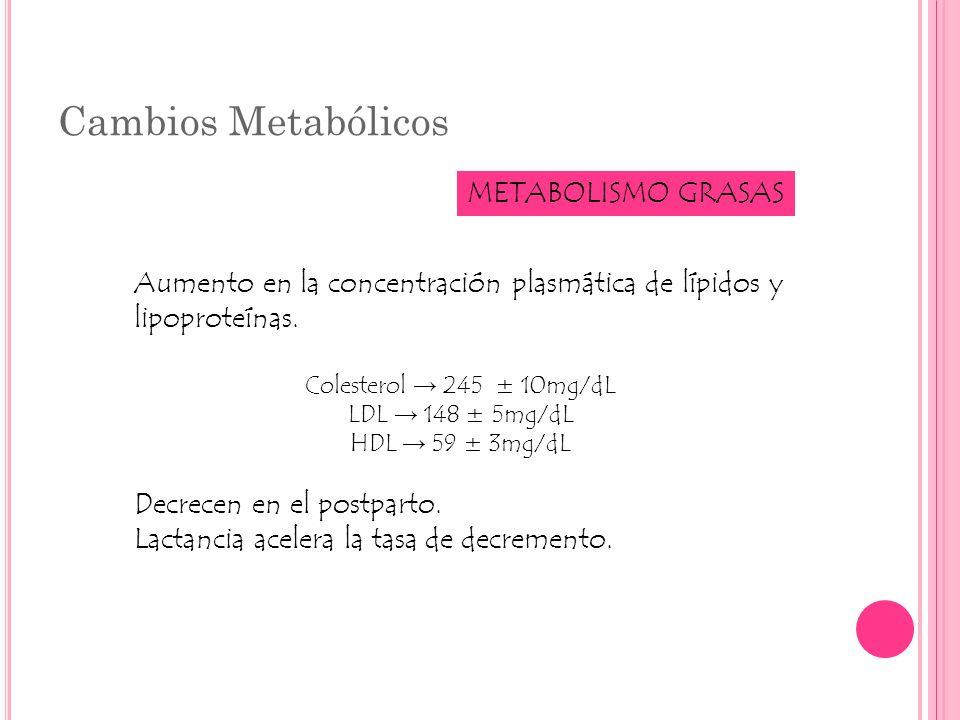 Cambios Metabólicos METABOLISMO GRASAS