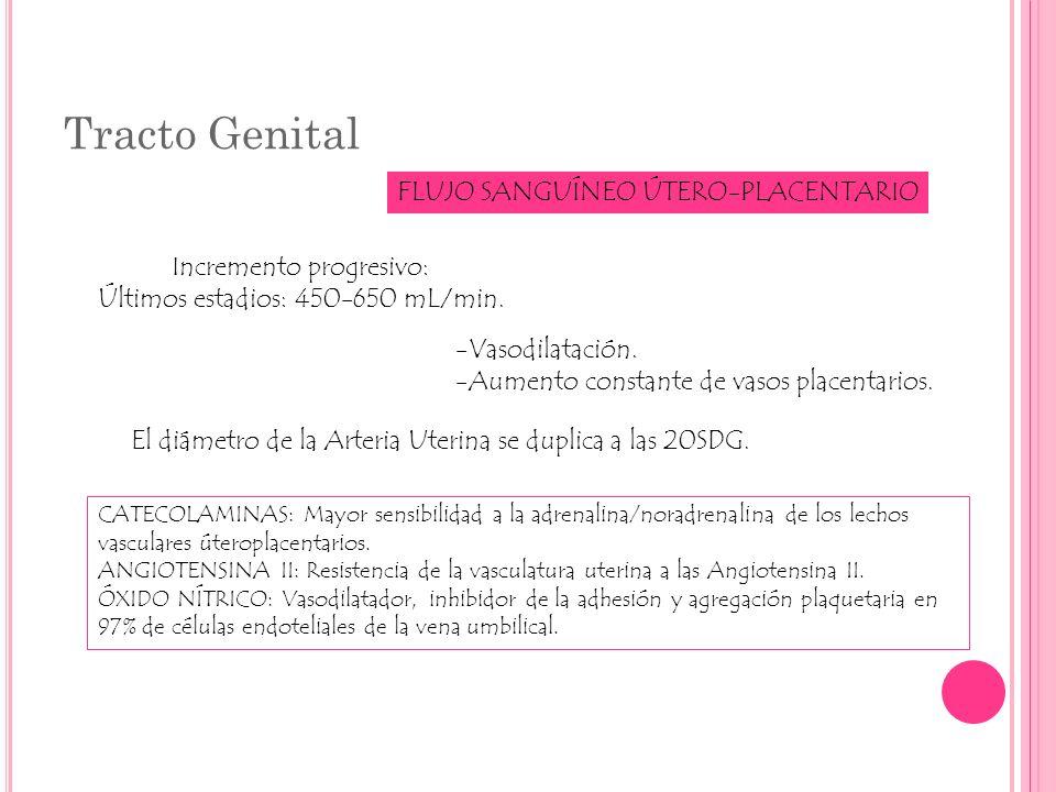 Tracto Genital FLUJO SANGUÍNEO ÚTERO-PLACENTARIO