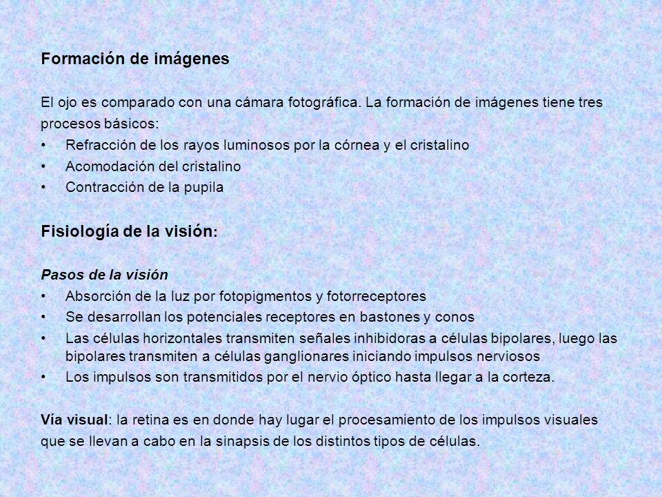 Fisiología de la visión: