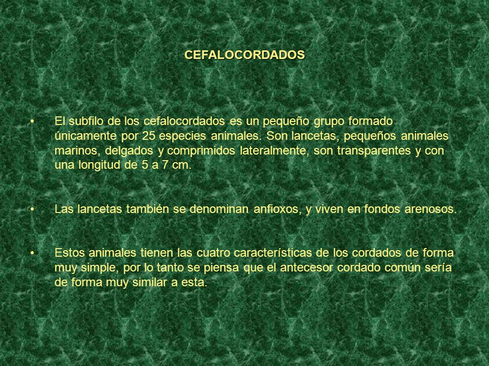 CEFALOCORDADOS