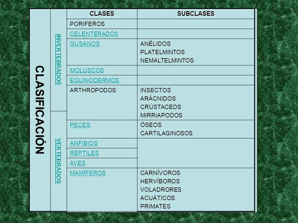 CLASIFICACIÓN CLASES SUBCLASES INVERTEBRADOS PORIFEROS CELENTERADOS