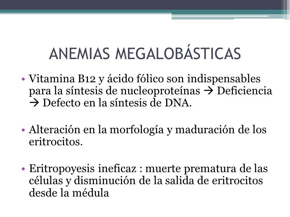 ANEMIAS MEGALOBÁSTICAS
