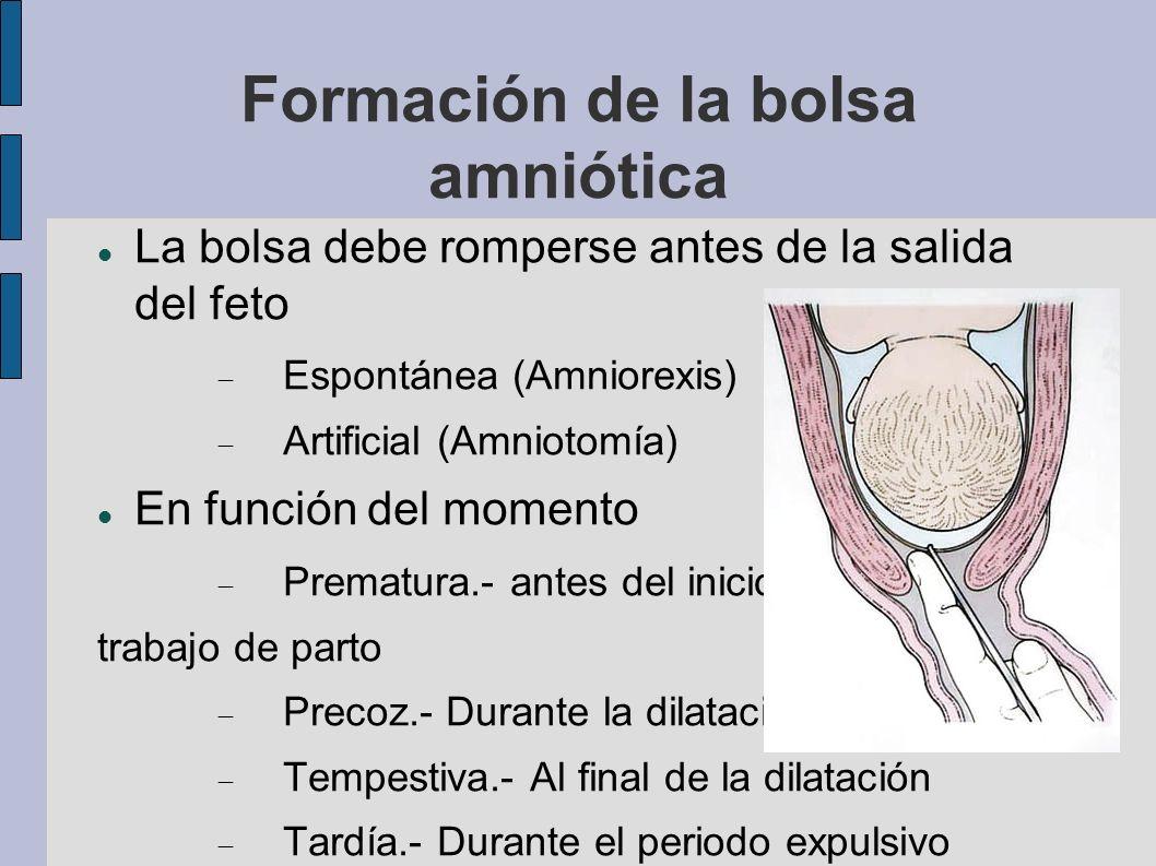 Formación de la bolsa amniótica