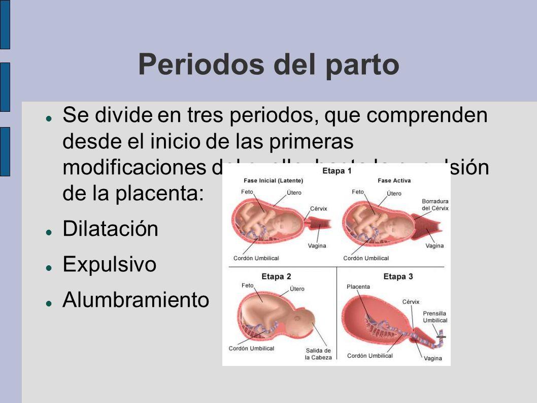 Periodos del parto